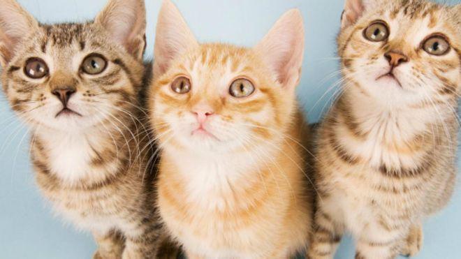 Cara Memandikan Kucing Yang Benar Ceritawanita Id
